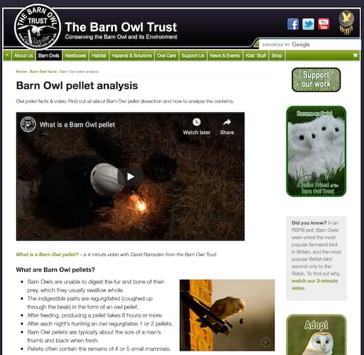 Barn Owl Pellet Analysis