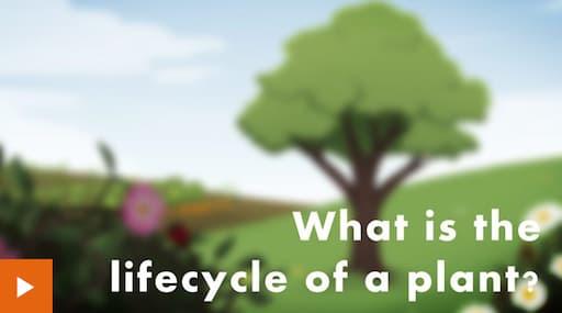 The Life Cycle of Plants (BBC Bitesize)