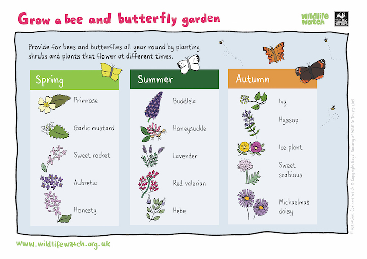 Grow A Bee and Butterfly Garden