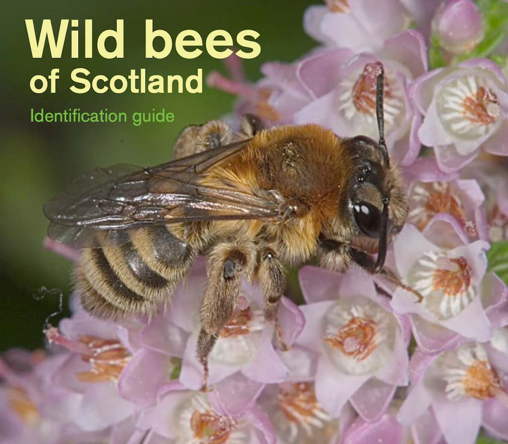 Bees In Scotland - Identification Guide