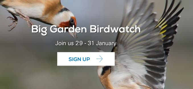 Big Garden Birdwatch