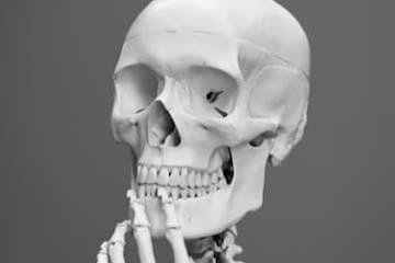 How Do Bones Work?