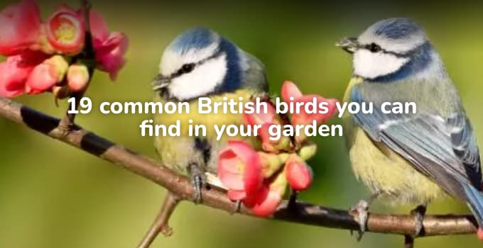 19 Common British Birds You Can Find In Your Garden