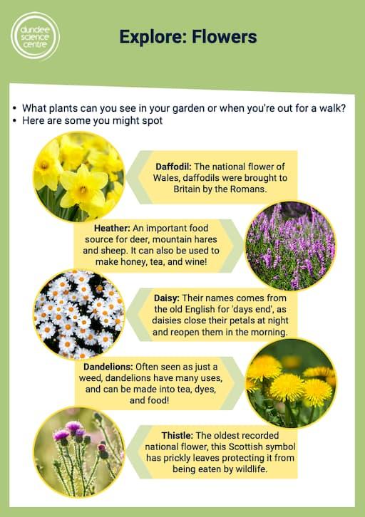 Explore: Flowers Activity Worksheet
