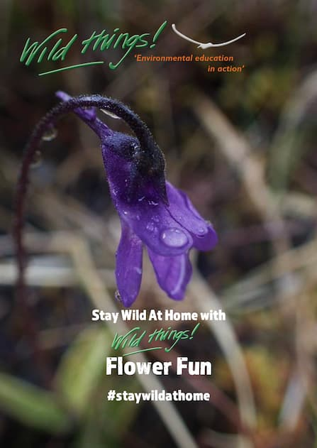 Flower Fun Activity Worksheet