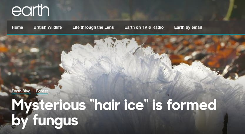 Mysterious 'Hair Ice' is Formed (BBC)