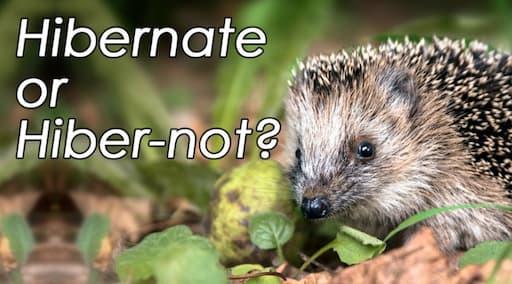 BBC Hibernate or Hiber-Not? Quiz