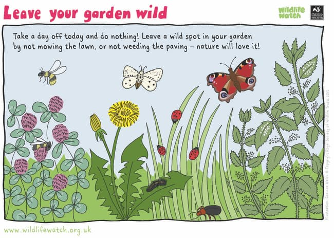 How To Grow A Wild Patch