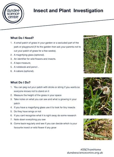 Insect and Plant Investigation PDF Worksheet