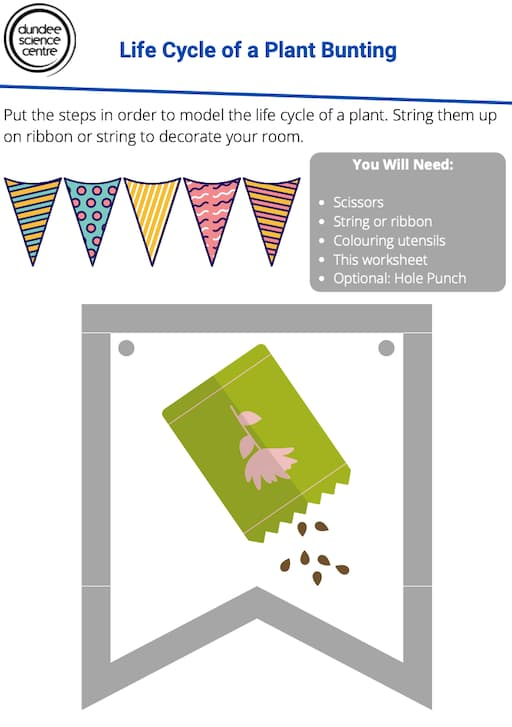 Life Cycle of a Plant Bunting Activity Worksheet