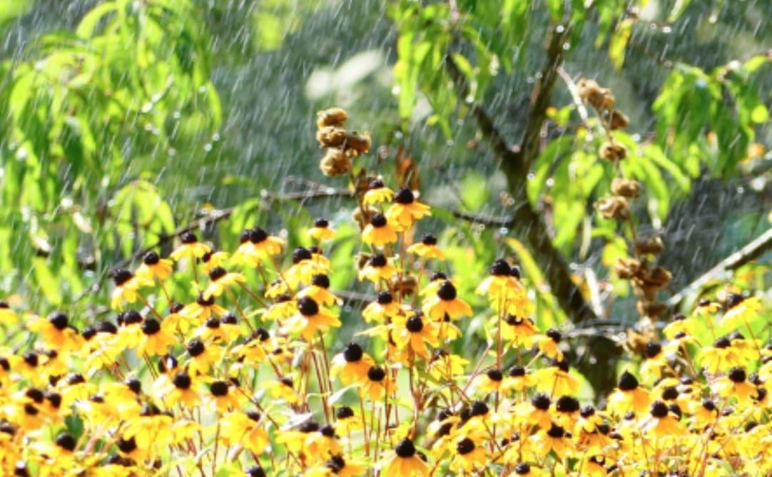 Rain In The Gardent