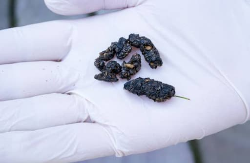 Garden Animal Poo Identification: Your Complete Guide on Critter Faeces