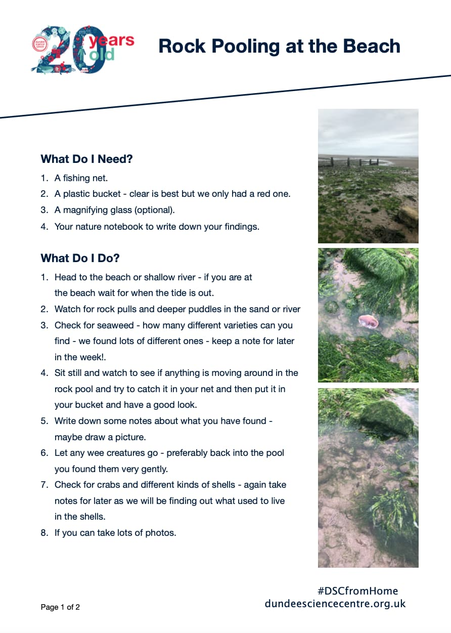 Rock Pooling Activity Worksheet