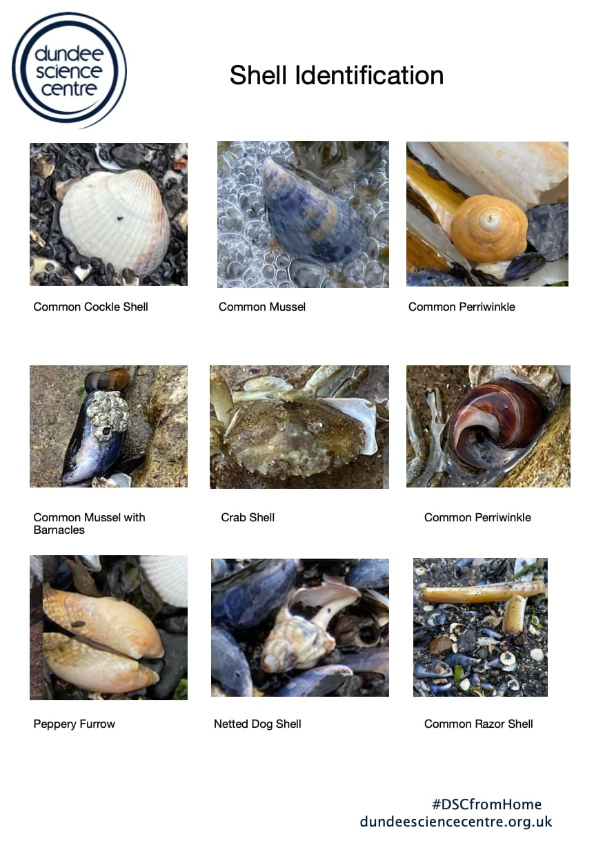 Shell Identification Activity Worksheet