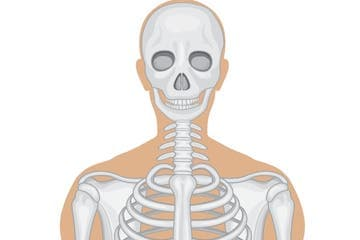 Draw A Skeleton