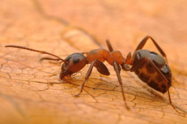 Let's Find Out About Ants!