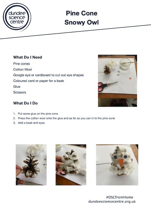 Snowy Owls Activity Sheet