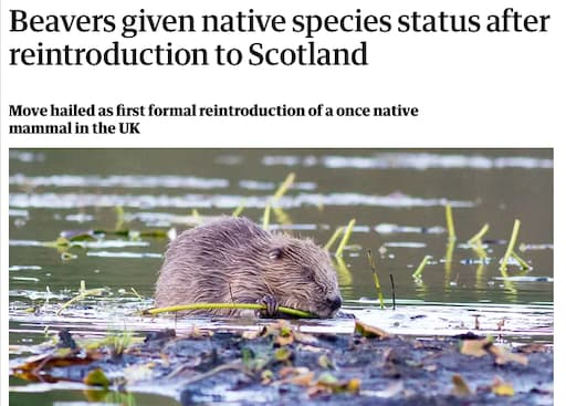 Beavers Give Native Species Status After Reintroduction to Scotland