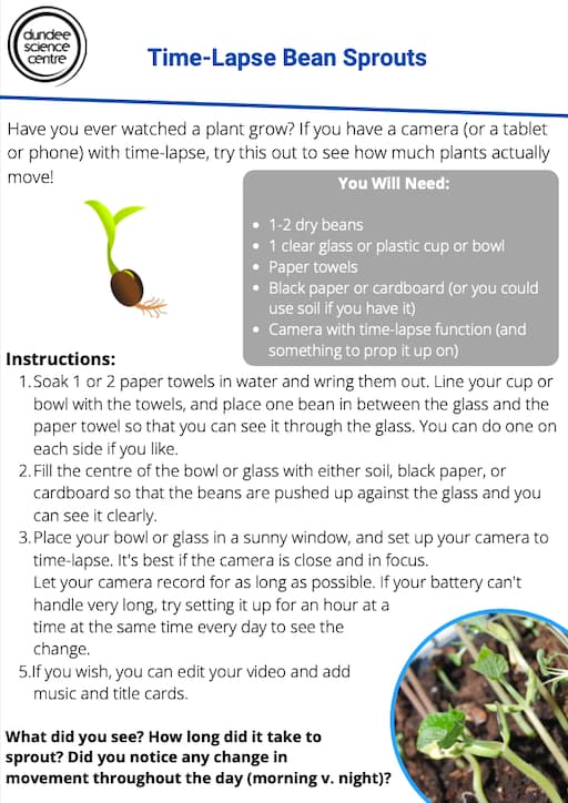 Time-Lapse Bean Sprouts Activity Worksheet