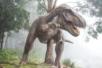 Dinosaur Week
