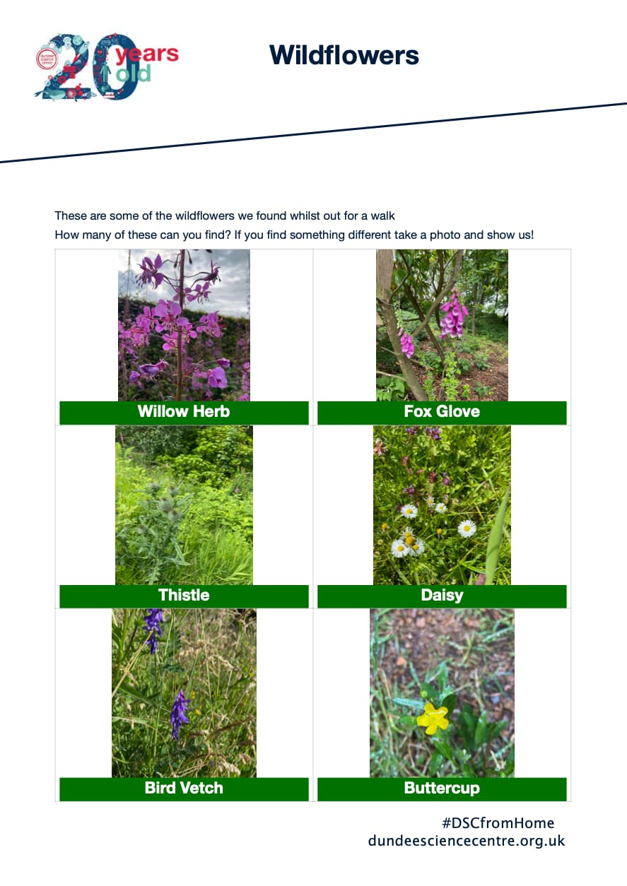 Wildflowers Activity Sheet