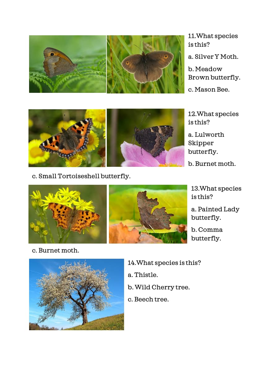 Wildlife Quiz Younger Children