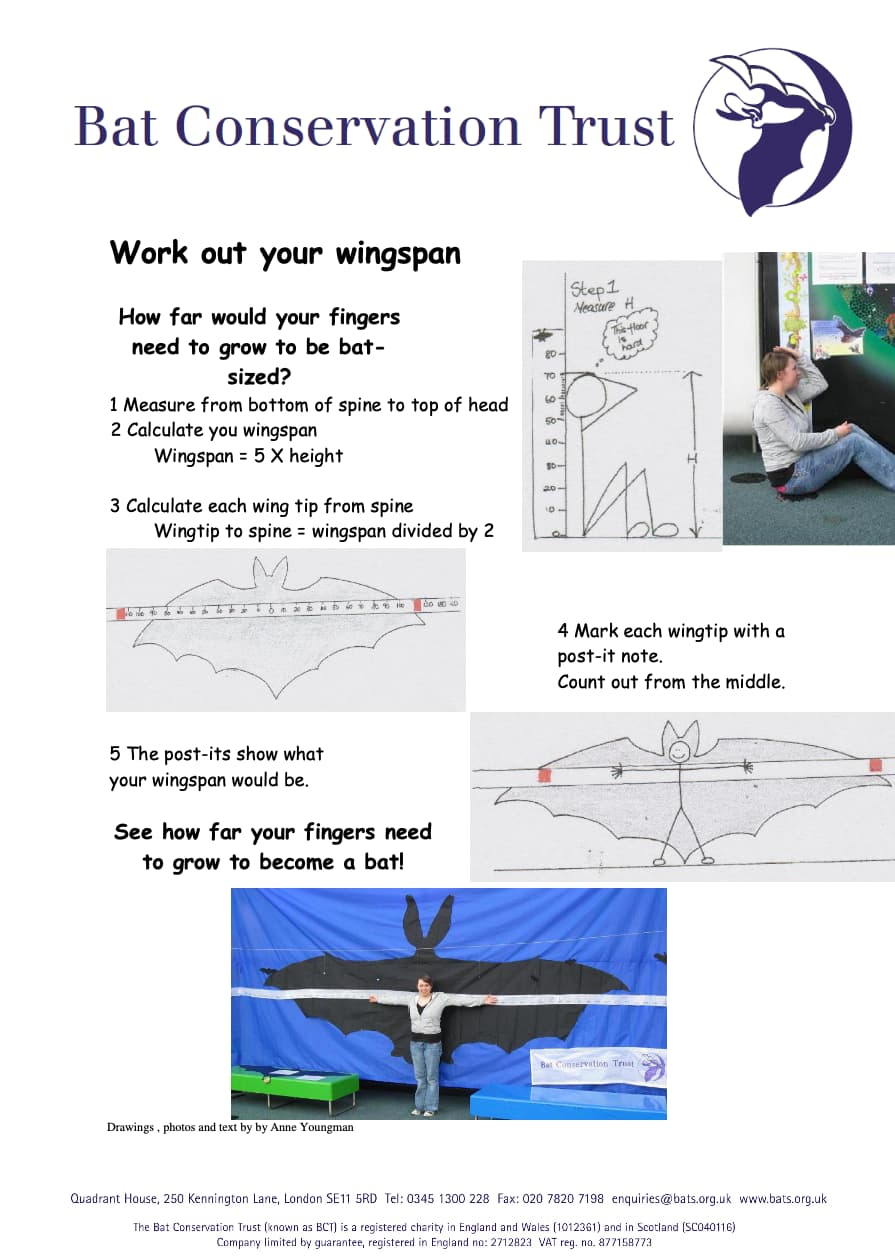 Work Out Your Wingspan (PDF) Worksheet
